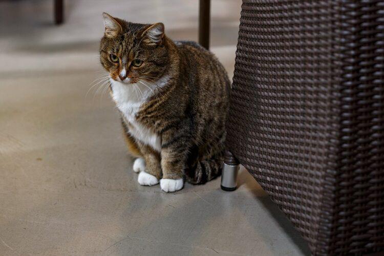 SVRZ Ter Schorre kat