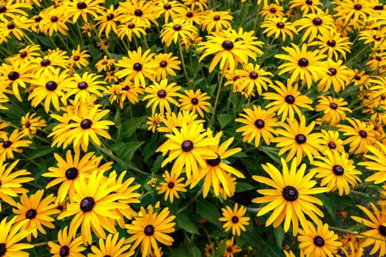 SVRZ t Veer bloemen