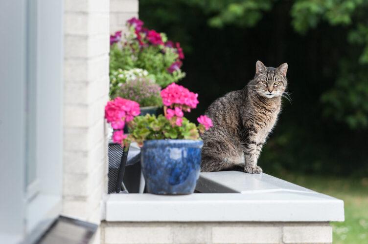 SVRZ de Tienden balkon en poes