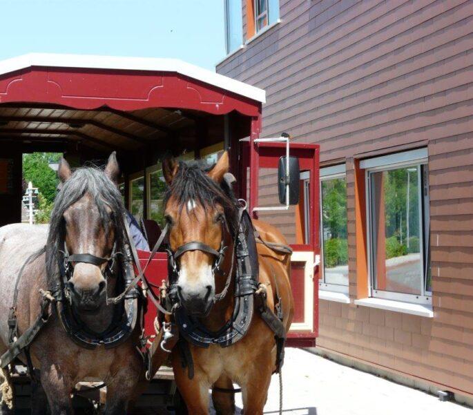 Huifkar met paarden